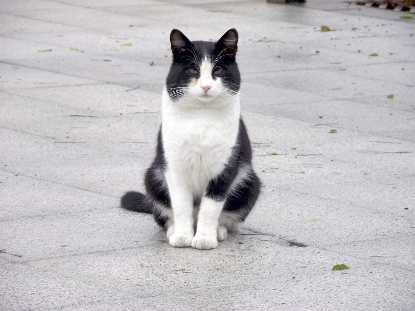 Castalla rep 2.670 euros de la Diputació per a la campanya d'esterilització gats de carrer