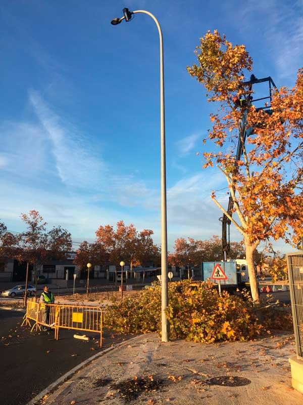 Comienza la poda de árboles en la avenida dels Geladors