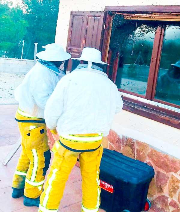 La Policía Local de Ibi constata un aumento de enjambres de abejas este año