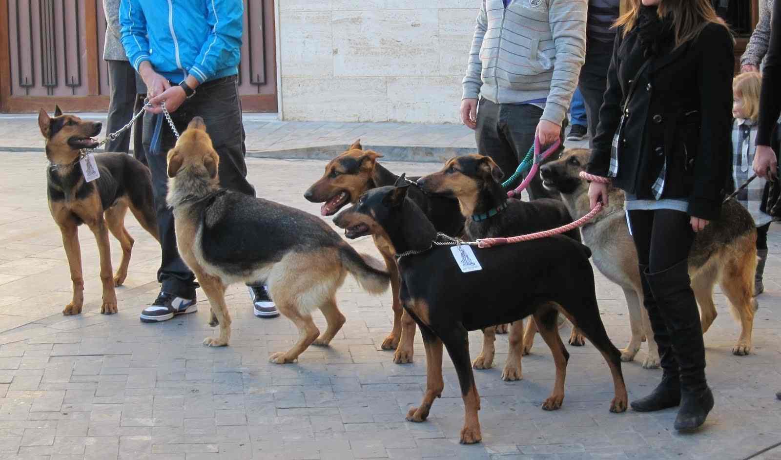 L'ordenança sobre tinença i protecció d'animals d'Onil començarà a estudiar-se en el pròxim plenari