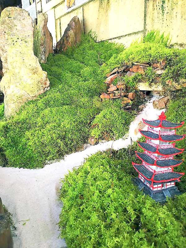 Nou espai briofitari al Jardí Botànic d'Ibi