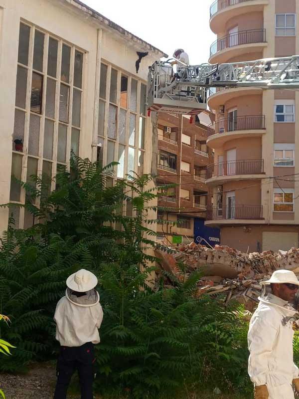 Els bombers retiren un gran eixam d'abelles d'una fàbrica abandonada a Ibi