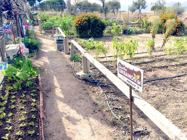 Subvención de 10.500 euros para huertos urbanos y dinamización de la economía local de Ibi