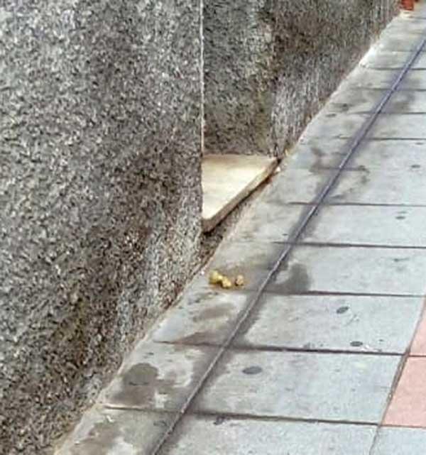 El PSOE de Ibi pide realizar análisis de ADN a las heces de mascotas en la vía pública
