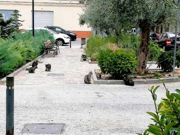 Ibi comença la campanya d'esterilització de gats de carrer