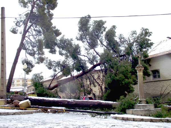 Ibi cuantifica en 300.000 euros los daños del temporal