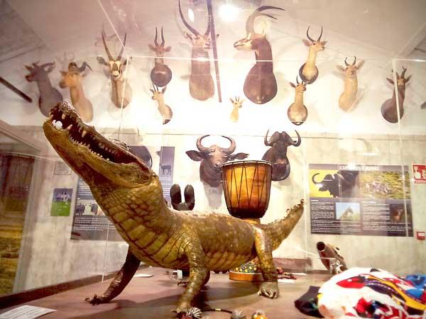 El Govern inclou al Museu de la Biodiversitat d'Ibi en el pla contra el tràfic il·legal d'espècies