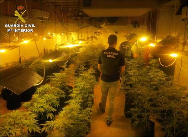 La Guàrdia Civil deté a Ibi a un home de 69 anys per cultivar marihuana en els seus dos habitatges